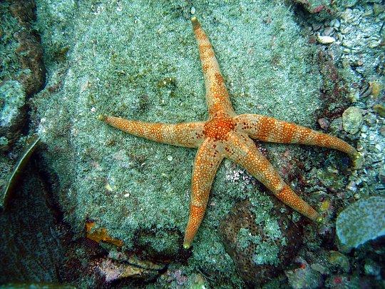 estrella de mar3.jpg
